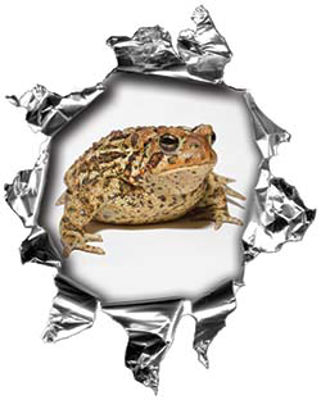 Mini Rip Torn Metal Bullet Hole Style Graphic with Fat Cute Toad